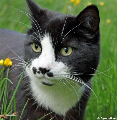 verdens søteste katt